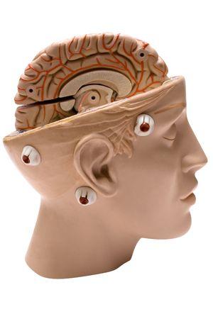 Human Brain (Side View) Stock Photo