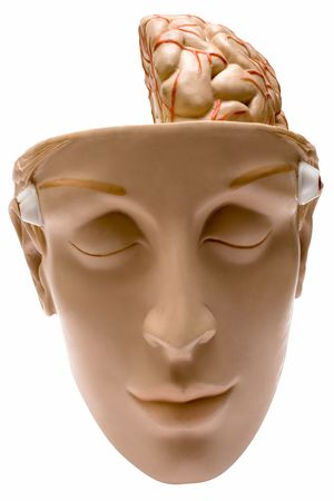 Human Brain w Path (Front View) Stock Photo