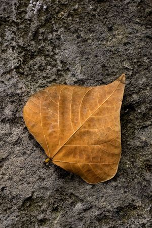removed: Single solitary autumn leaf fallen to the ground.