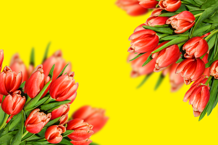 Spring tulips flowers for wedding, greeting cards, seasonal banners.