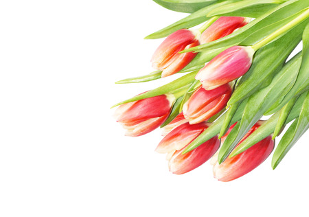 Tulips bouquet isolated on white background with space for text. Spring red tulips flowers, top view for Mothers Day, greeting cards, seasonal banners.