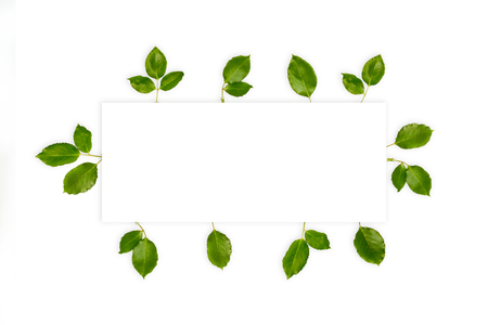 Fresh green leaves frame with space for text, isolated on white. Minimalistic summer background for cards, invitations designs. Green leaves background, rose leaves organic design.