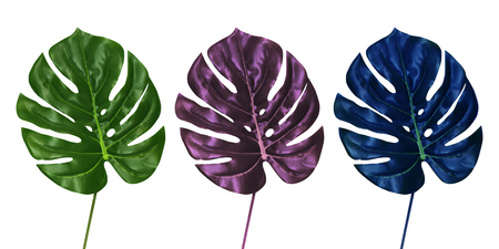 Monstera leaves set isolated on white background, front view. Tropical palm leaf concept in regular green, vivid purple and blue colors.