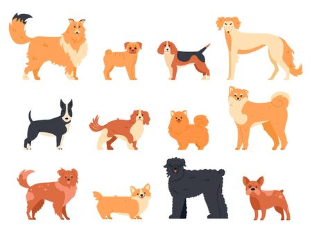 Dogs breed character. Purebred dog , cute puppy pug, beagle, welsh corgi and bull terrier, funny domestic pets vector isolated illustration icons set. Human companion. Cartoon animal bundle