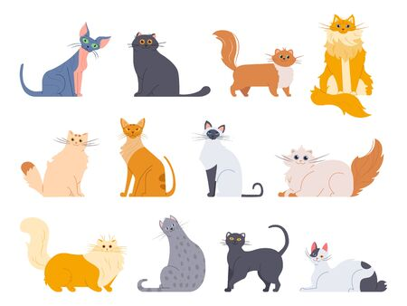 Cat breeds. Cute fluffy cats, maine coon, bobtail, siamese cat and funny sphynx cat, breeds pets isolated illustration icons set. Flat vector kittens bundle 向量圖像