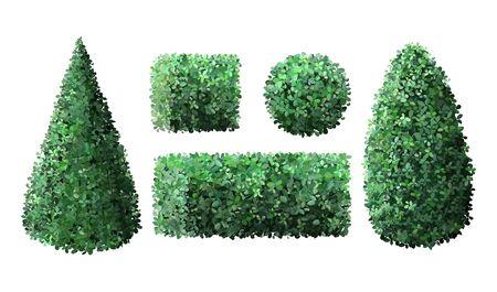 Realistic garden bushes. Topiary boxwood gardener evergreen fence with leaves, geometric tree crown bush foliage nature green seasonal shrub vector isolated 3d illustration set Vector Illustratie