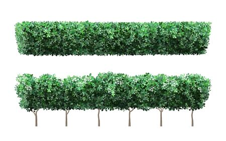 Realistic garden plant fence. Nature green seasonal bushes, tree crown bush foliage and green fence with cute flowers. Garden shrub vector illustration set. 3d public park and garden elements Archivio Fotografico - 140042807