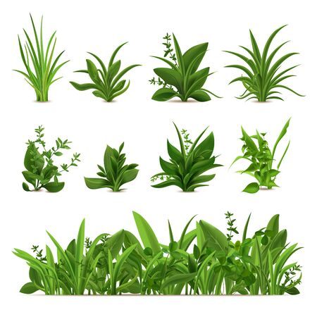Realistic grass bushes. Green fresh plants, garden seasonal spring and summer greens and herbs, botanical sprout vector isolated set. Natural lawn meadow bushes, floral vegetation border