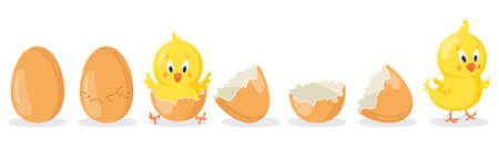 Cartoon hatched easter egg. Cracked chicken eggs with cute chicken mascot, newborn baby chick bird hatching from egg vector illustration set. Poultry cute yellow character appearance