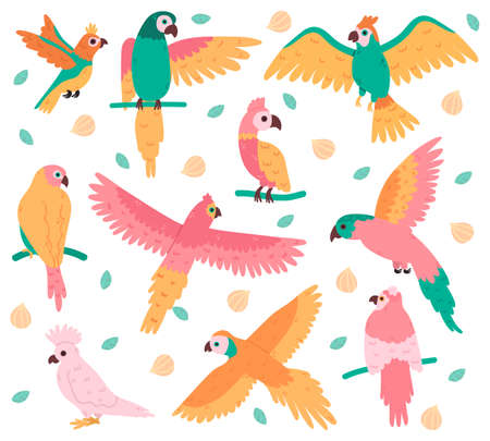 Tropical parrots. Jungle colorful birds, cute cockatoo, jaco and budgerigar. Summer tropical parrots vector illustration set. Beautiful wild flying and sitting creatures with feather Ilustração