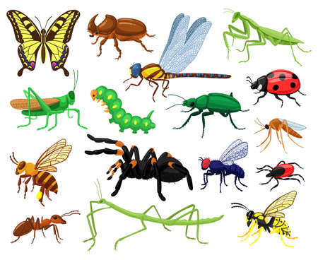 Cartoon insects. Butterfly, beetle, spider, ladybug and caterpillar, wild forest entomology insects. Cute nature wildlife insects vector illustration set. Grasshopper and butterfly, insect dragonfly