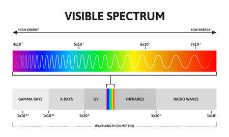 Visible color spectrum. Sunlight wavelength and increasing frequency vector infographic illustration. Visible spectrum color range. Rainbow electromagnetic waves. Educational physics line Vetores