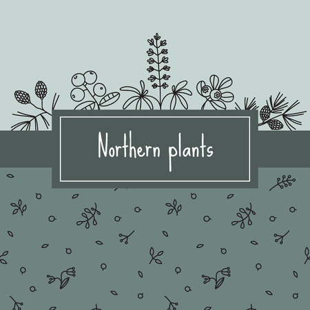 Northern plants, banner with items like lupines, spruce, cones, blueberries, cranberries, cowberry. Vector illustration. Greeting card template, hand drawn style.