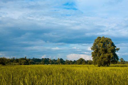 Prairie of Northeast Thailand