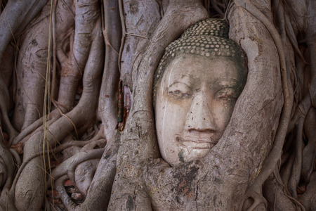 an obeisance: Buddha in the roots in public temple