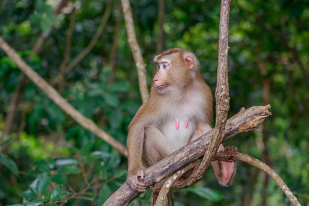 The female monkey sitting on branch and looking to the right for something.