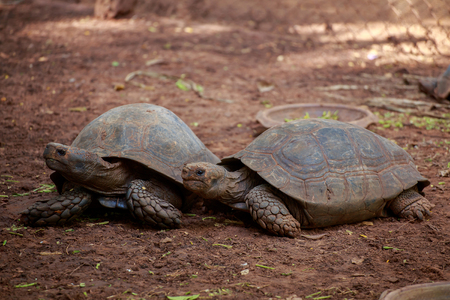 looked: The two turtles looked at something in the park.