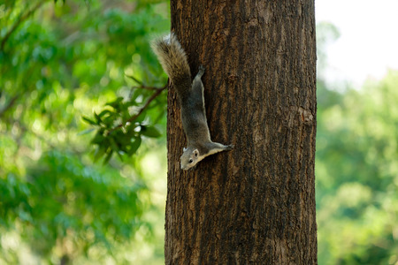 ardilla: Little squirrel perched on the tree.