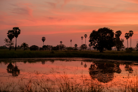 sugar palm: Orange sky of evening sunset and the silhouette of sugar palm near pond.