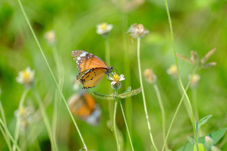 The butterfly perched in the thicket of flower in the garden.