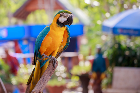 The pretty parrot perched on a branch. Stock Photo