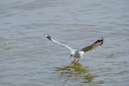 Seagull swooped down on the seafloor.