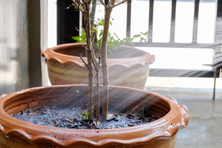 Water line down the tree in the pot.