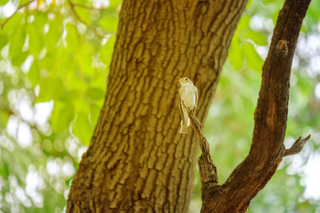 The bird perched on a branch in forest in warm light.