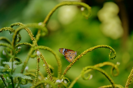 livelihood: The butterfly perched on small branch in warm light.