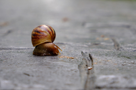 Closeup snail on the ground floor.