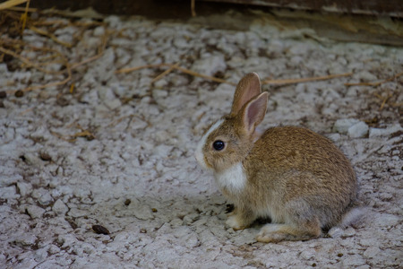 timorous: The small rabbit is crouching on the floor.