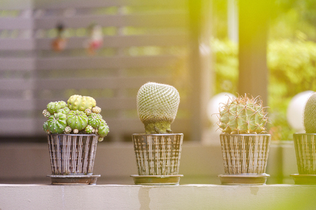 Cactus in a pot put on the wall on sunshine with copy space.