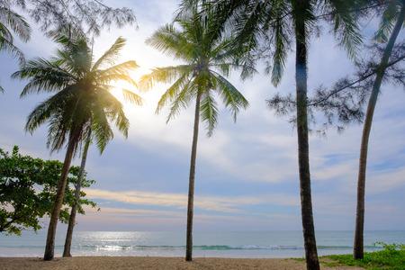 The coconut tree seaside in sunlight.