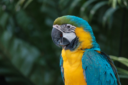 The pretty parrot looking something in the forest.