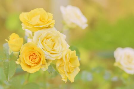 Yellow rose bouquet surrounded by orange light.