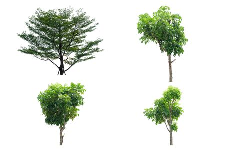 There are four trees and leaves on white background.