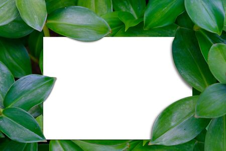There is a blank white sheet put in green leaf.