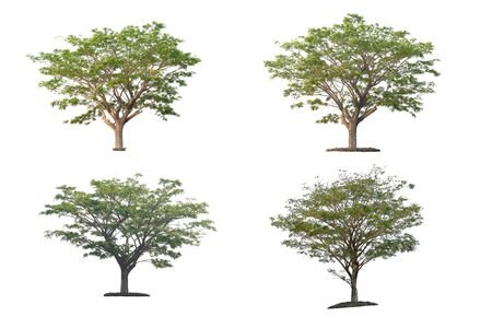 Set of trees on white background