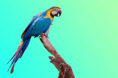 Parrot on branch on green background with copy space.