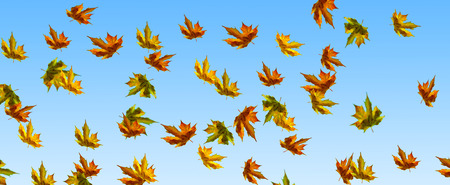 falling foliage in autumn - panorama background