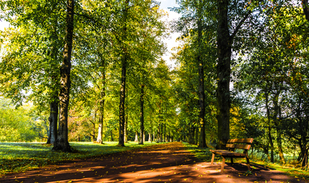 boles: late summer in the park- avenue of trees Stock Photo