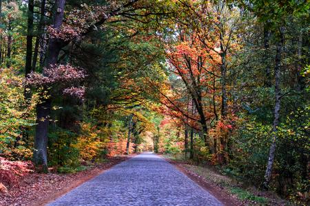 boles: road in autumn