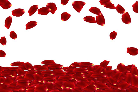 red rose: raining red rose petals