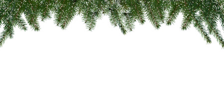 conifer: winter background with conifer twigs on white Stock Photo