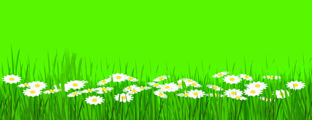 daisies on lemongreen background Stock Photo