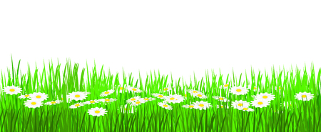 estival: meadow in spring time with many daisies