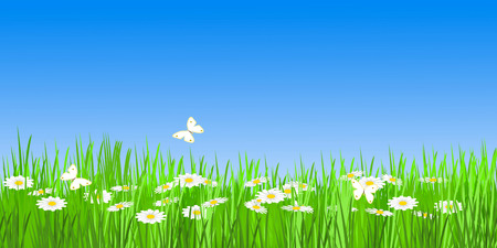 summery meadow Stock Photo