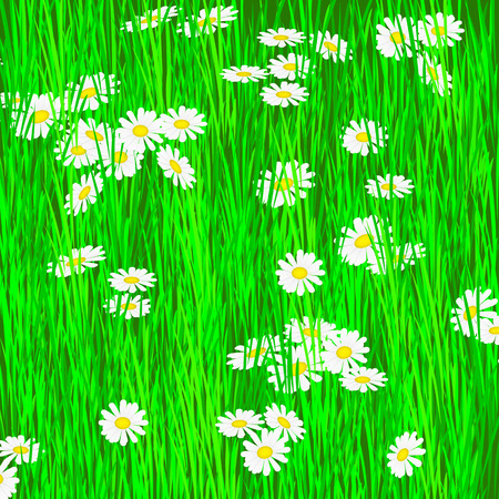grass close up: daisies in meadow