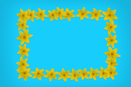frame from daffodils on turquoise Stock Photo