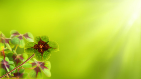 four leaf clover on bright blurred background